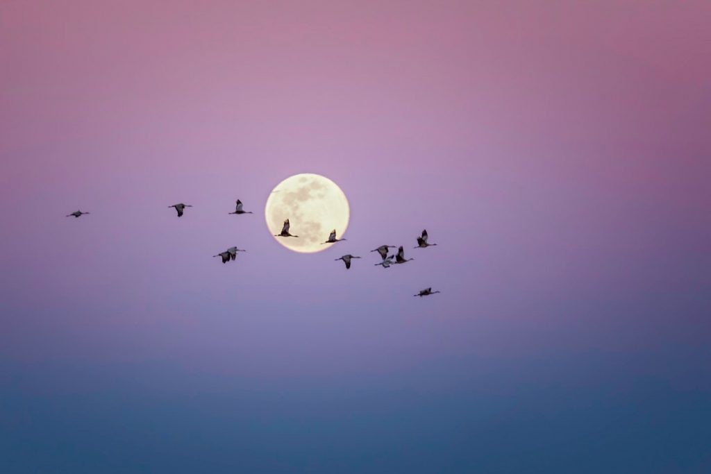 Cranes and Super Moon by Marc Bacon